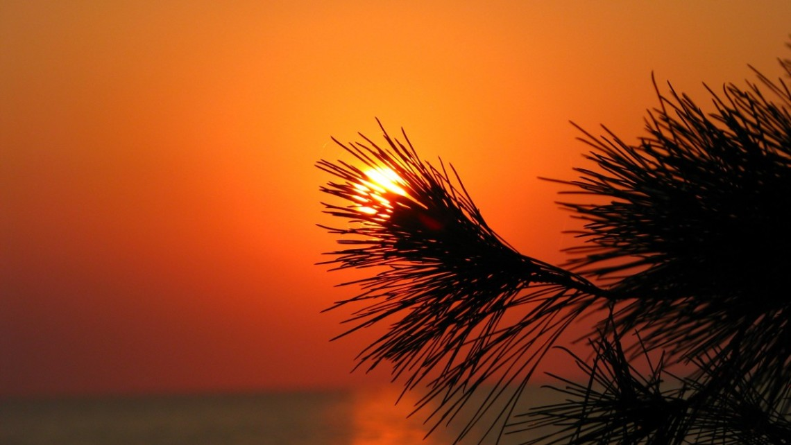GS-sunset-pine-needles