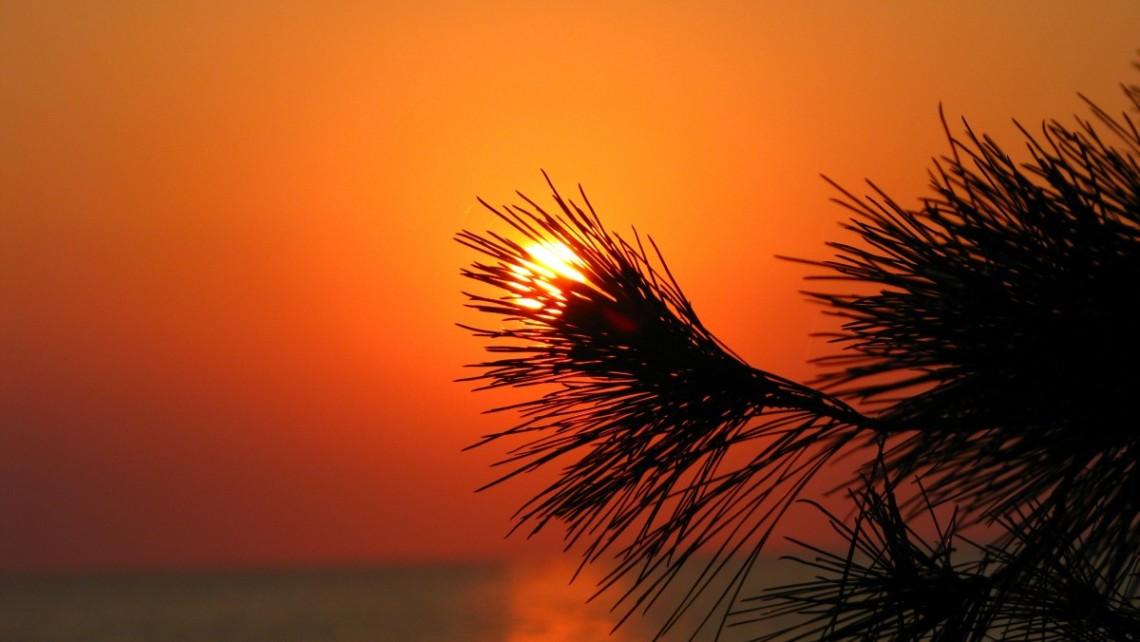 GS-sunset-pine-needles